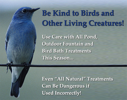 use care with pond and water treatments and check out safer alternatives