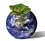 frog on clean earth